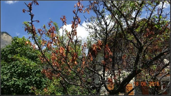 arbre-fruitier_1