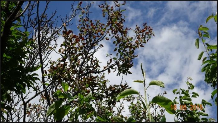 arbre-fruitier_13
