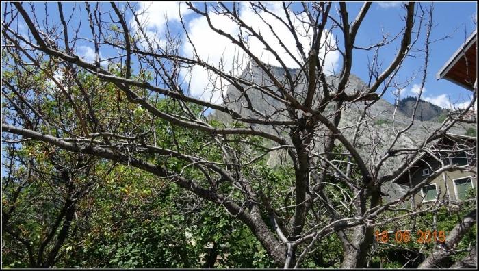 arbre-fruitier_2