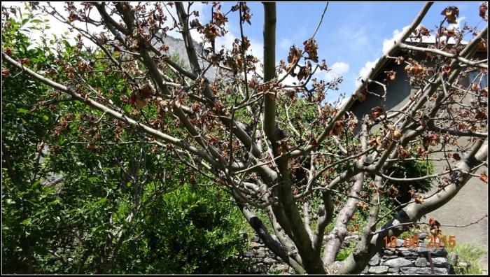 arbre-fruitier_6