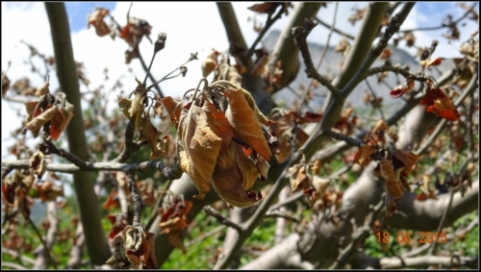 arbre-fruitier_7